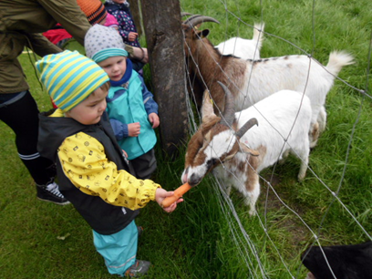 """Kita Unter`m Regenbogen: Krippenkinder führen """"tierisches"""" Projekt durch"""